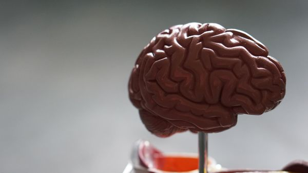 Neuroscience startups push boundaries.