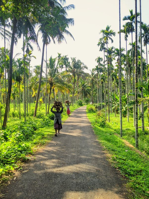Kerala, An Indian God's Own Country Where Life Embraces Nature And Capital Of The World's First Martial Art